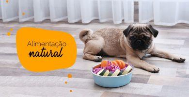 Alimentação natural para pugs: pug com um prato de vegetais