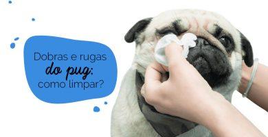 Como limpar as dobras do pug: cão sendo higienizado
