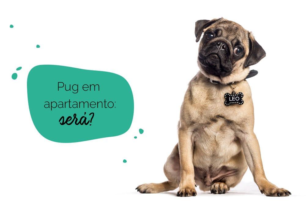 cachorro pug em apartamento: pug com cara de dúvida