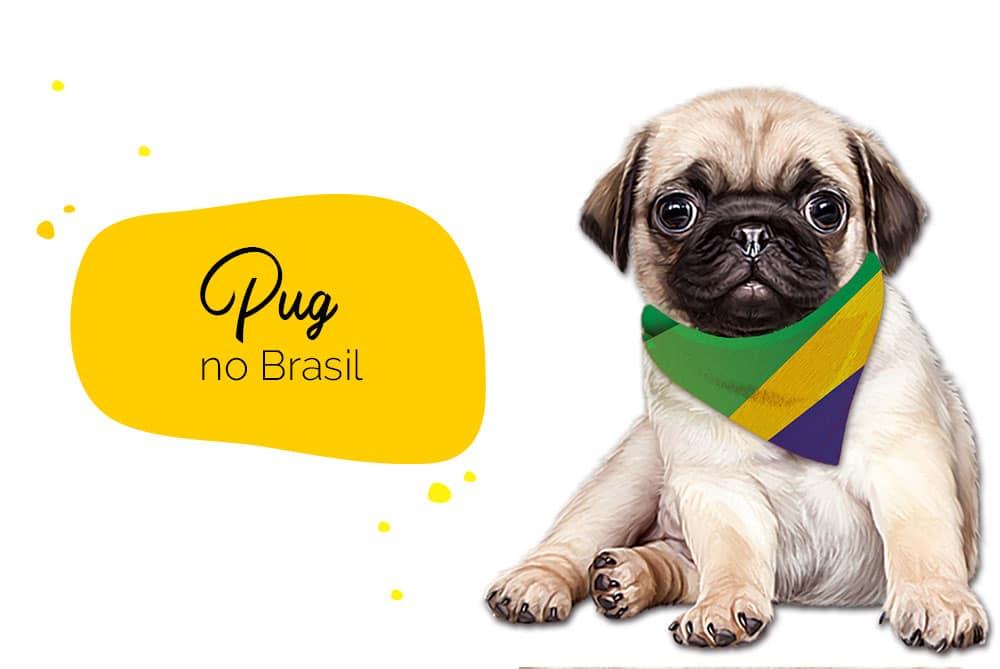 Pug no Brasil: pug com bandana do Brasil