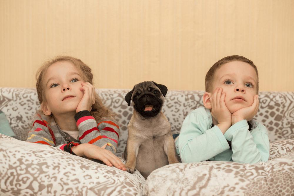 Comportamento do pug com crianças