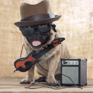 Pug folk com violão