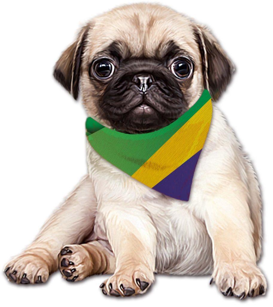 Pug no Brasil