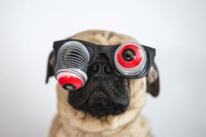 Pug com óculos de olhos saltadores