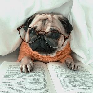 Pug com óculos e livro