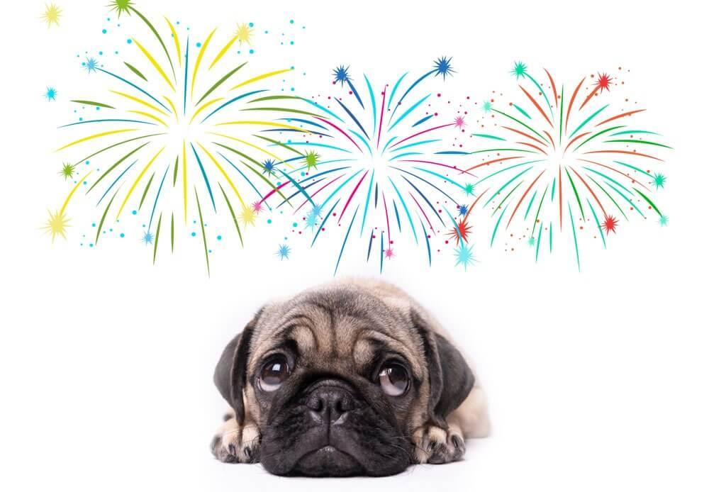 cachorro pug com medo de fogos de artificio