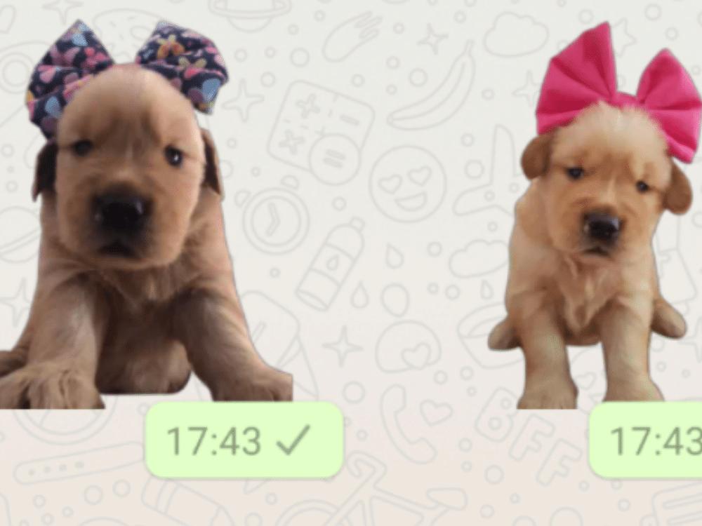 Screenshot de app para criar figurinhas no whatsapp