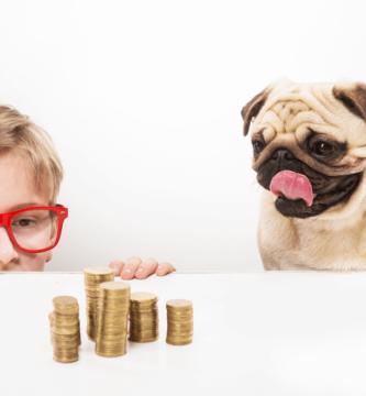 Quanto custa um pug filhote: menino e pug com uma pilha de moeda