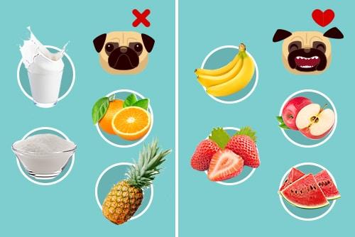 Alguns ingredientes permitidos e proibidos para cachorro