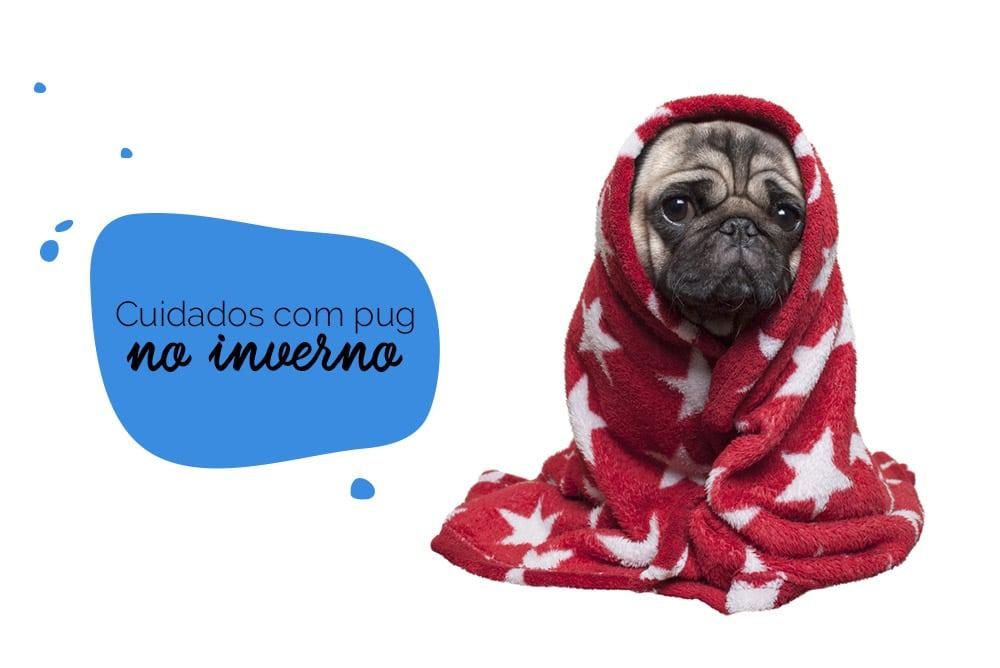 Cachorro no frio: pug enrolado em um cobertor