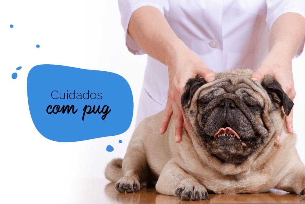 Cuidados com pug: cão sendo massageado