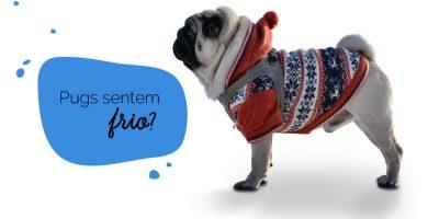 Cachorro sente frio: foto de um cachorro pug agasalhado