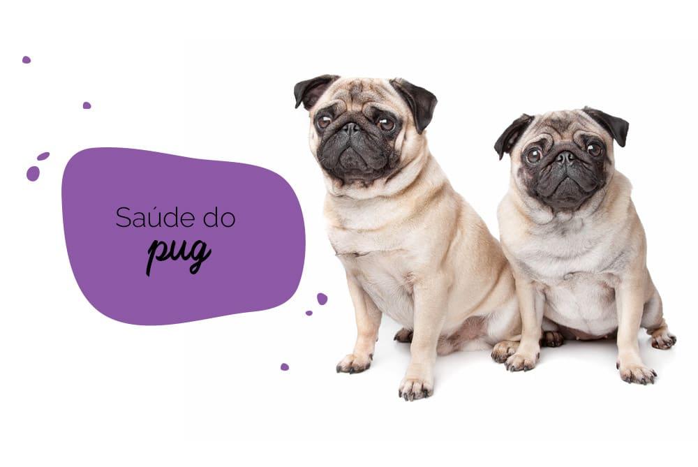 Saúde do Pug: dois pugs sentados