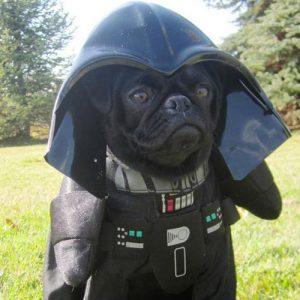 Filhote de pug preto com uma fantasia do Darth Vader