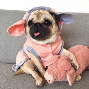 filhote de pu com pijama de porquinho