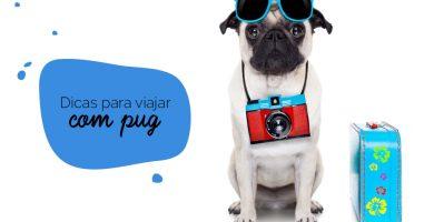 Viajar com cachorro: pug sentado