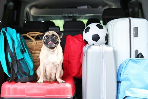 Pug no carro com malas de viagem