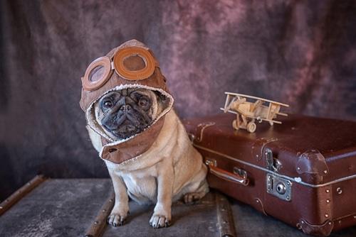 Pug de aviador