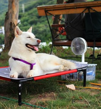 cachorro peludo tomando sol