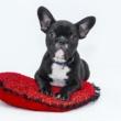 4 dicas para criar um ambiente agradável para o seu cachorro