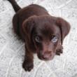 Como escolher uma ração para cuidar do peso do seu cachorro?