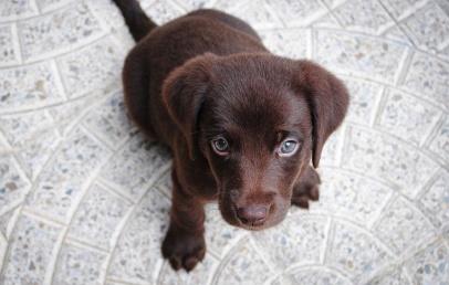 Qual a melhor ração para controlar o peso do cachorro?