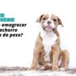 Como emagrecer seu cachorro obeso: dicas práticas
