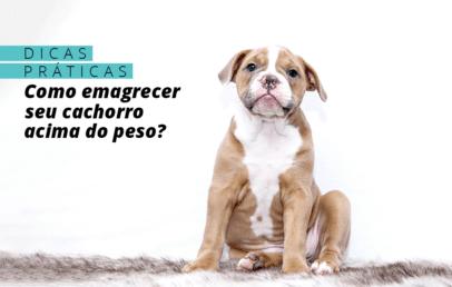 Dicas práticas para fazer o cachorro perder peso