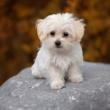 Intoxicação com produtos de limpeza: mantenha seu pet em segurança