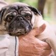 Suplemento Geriátrico: o melhor cuidado para o pet idoso