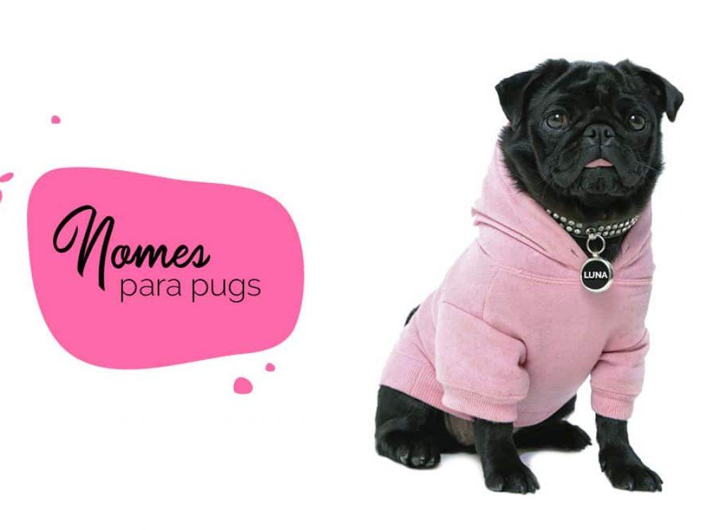 Nomes para pug: como escolher nome para o cachorro