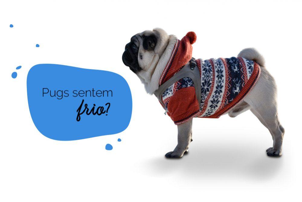 Cachorro sente frio: foto de um pug agasalhado