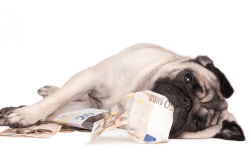 quanto custa um pug filhote: pug com notas de dinheiro